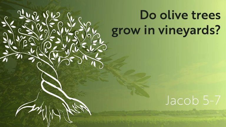 Do Olive Trees Grow in Vineyards
